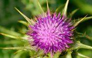Alternative Medicine for Liver Cancer